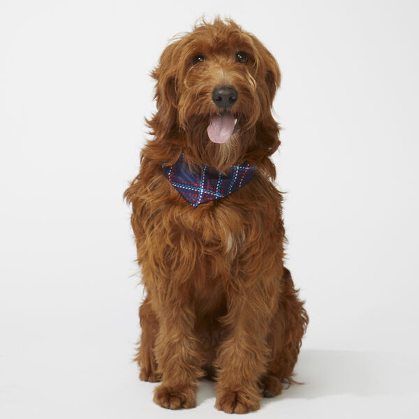 PET PLAID BANDANA - Sapphire/Pitch Yellow